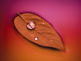 Leaf with Water Droplet Photographic Print by Green Light Collection