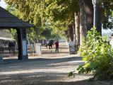 Horse Being Led Out of Stable for Morning Exercise, Club Hipico, Santiago, Chile Photographic Print by Green Light Collection