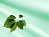 Sprig of Green Leaves on Pale Aqua Fabric Photographic Print by Green Light Collection