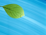 Single Green Leaf on Streaked Blue Fabric Photographic Print by Green Light Collection