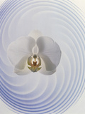 White Orchid Floating in Crystal Bowl Photographic Print by Green Light Collection
