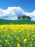 Rape Field Tayside Scotland Photographic Print by Green Light Collection