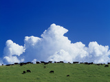 Cows Grazing in Green Pastures with Huge Cloud Lámina fotográfica por Green Light Collection