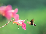 Butterfly on Pink Flower Photographic Print by Green Light Collection
