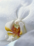 Close Up of Center of White Orchid with Yellow Center Photographic Print by Green Light Collection