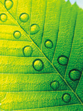 Extreme Close Up of Leaf Vein with Droplets Photographic Print by Green Light Collection