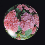 Floral Pattern in Sphere Photographic Print by Green Light Collection