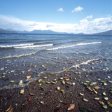 Leaves on the Beach Photographic Print by Green Light Collection