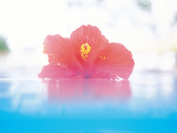 Flower with Blur Background Photographic Print by Green Light Collection