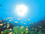 School of Fish And Sunlight, Undersea View Photographic Print by Green Light Collection