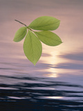 Green Leaves Hovering Above Shimmering Dark Blue Water with Light Through Clouds Photographic Print by Green Light Collection