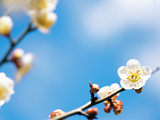 Branch of Flowers Against Blue Sky Photographic Print by Green Light Collection