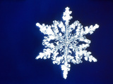 Snowflake Photographic Print by Green Light Collection