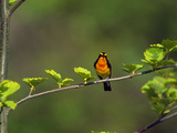 Bird Perching on a Tree Lámina fotográfica por Green Light Collection