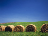 Hay Bales in a Field, Biei, Hokkaido, Japan Photographic Print by Green Light Collection