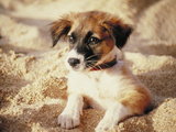 Dog Hawaii Photographic Print by Green Light Collection