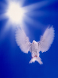 One Dove with Wings Outstretched Flying Towards Brilliant Light in Dark Blue Sky Photographie par Green Light Collection