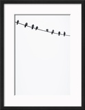 Birds on a Wire Framed Photographic Print by Lars Hallstrom