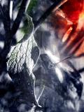 Firefly Photographic Print by Alexandra Stanek