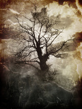 Yggdrasil Photographic Print by Alexandra Stanek
