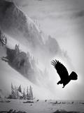 Snowbird Fotografie-Druck von Alexandra Stanek