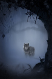 Wolfnight Photographic Print by Alexandra Stanek