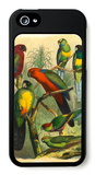Tropical Birds II iPhone 5 Case by  Cassel