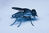 Metal Fly Photographic Print by Eugenia Kyriakopoulou
