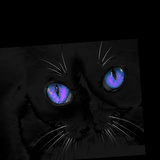 Violet Eyed Cat Photographic Print by Dee Smart