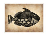 Vintage Fish Poster by  NaxArt