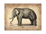 Vintage Elephant Art by  NaxArt