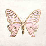 Butterfly Impression IV Giclée-tryk af Irene Suchocki