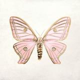 Butterfly Impression IV Wydruk giclee autor Irene Suchocki