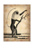 Vintage Monkey Prints by  NaxArt