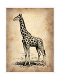 Vintage Giraffe Posters by  NaxArt