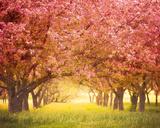 Pink Blossom Giclee Print by Irene Suchocki