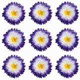 Polka Flowers I Giclee Print by James Guilliam