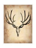 Vintage Deer Scull Print by  NaxArt