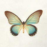 Butterfly Impression II Giclée-tryk af Irene Suchocki