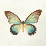Butterfly Impression II Wydruk giclee autor Irene Suchocki