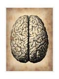 Vintage Brain Art by  NaxArt