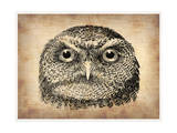 Vintage Owl Face Prints by  NaxArt