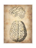 Vintage Brain Anatomy Poster by  NaxArt