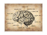 Vintage Brain Map Anatomy Plakater af NaxArt