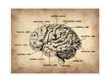 NaxArt - Vintage Brain Map Anatomy - Reprodüksiyon