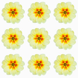 Polka Flowers III Giclee Print by James Guilliam