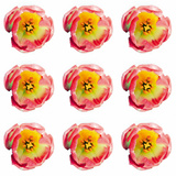 Polka Flowers II Giclee Print by James Guilliam