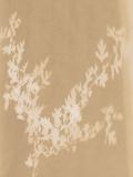 Hawthorn Giclee Print by Sarah Cheyne