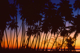Tropical Twilight Giclee Print by Mike Toy