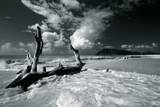 Driftwood Shore Impression giclée par Mike Toy